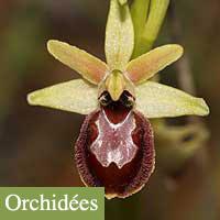 orchidee gard